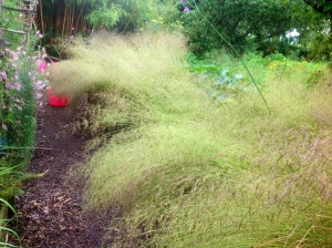 Deschampsia lodged in rain