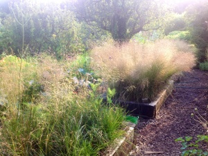 Deschampsia density