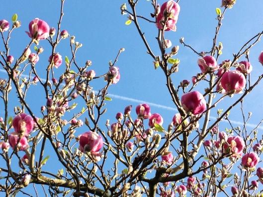 Barn house garden April