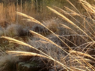 Winter miscanthus grasses terrace layers