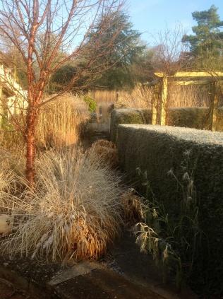 Winter january frost monks path Grassery