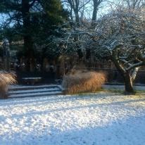 Winter january snow miscanthus apple tree