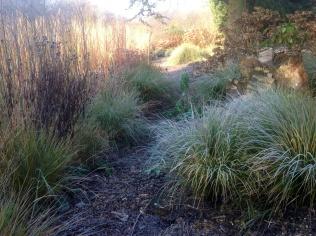 Winter anemanthele Bark Path