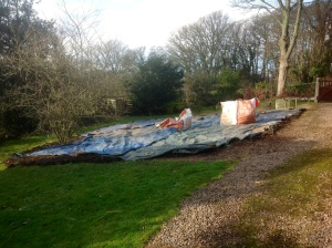 image deschampsia mulched & sheeted
