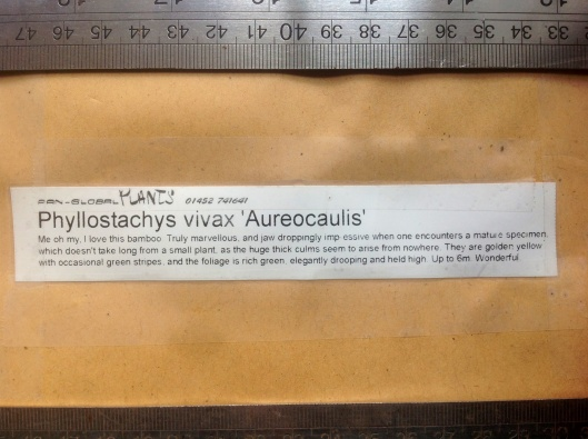 Phyllostachys vivax nursery label, Nick Macer