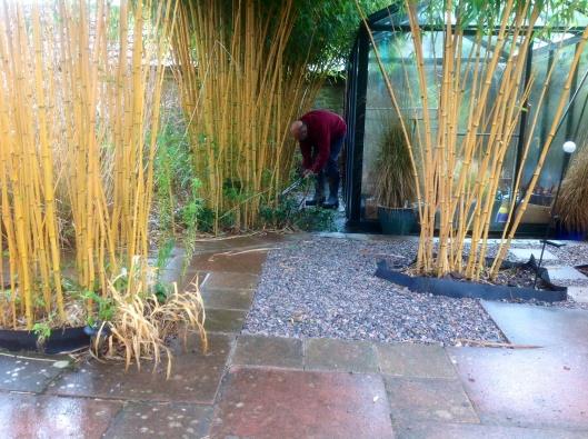 Thinning bamboo stems  February