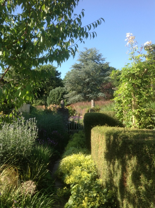 Blue cedar July