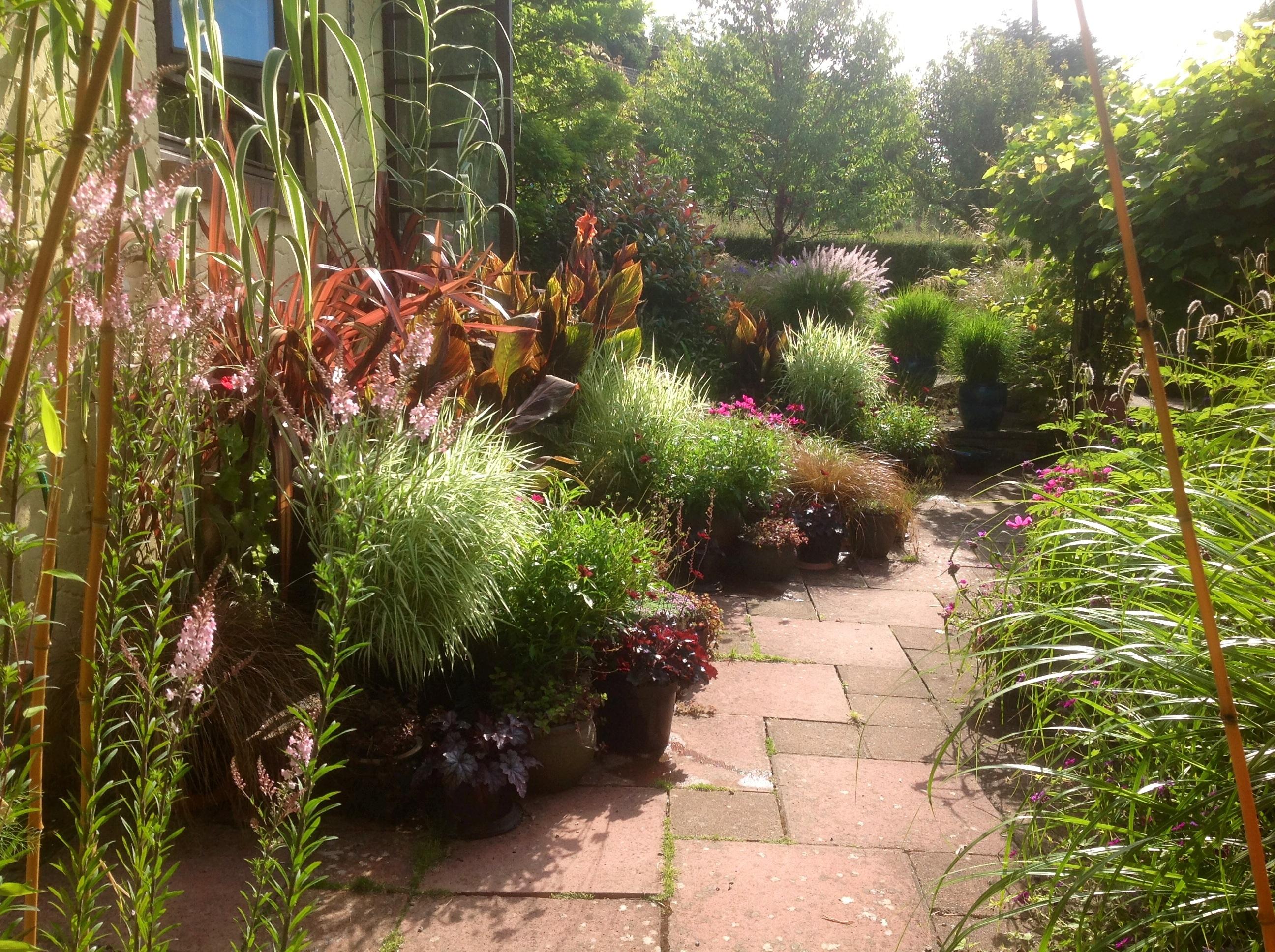 Summer patio pots 2014 | Barn House Garden