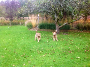 The dogs playing under the apple tree