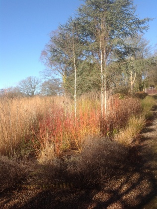 Winter miscanthus birches drive