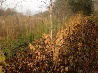 Autumn November cornus birch
