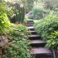 Spring yard steps hosta hakanachloa