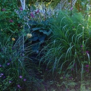 Miscanthus geraniums