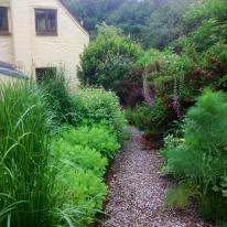 Spring round bed foxgloves fennel calamagrostis sedum