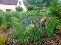 Spring log slices and iris sibirica