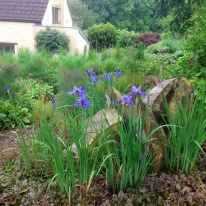 Spring log slices and iris sibirica