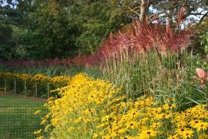 Barn House Garden - Miscanthus hedge in August