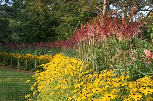 Barn House Garden - Miscanthus hedge in August