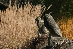Miscanthus March
