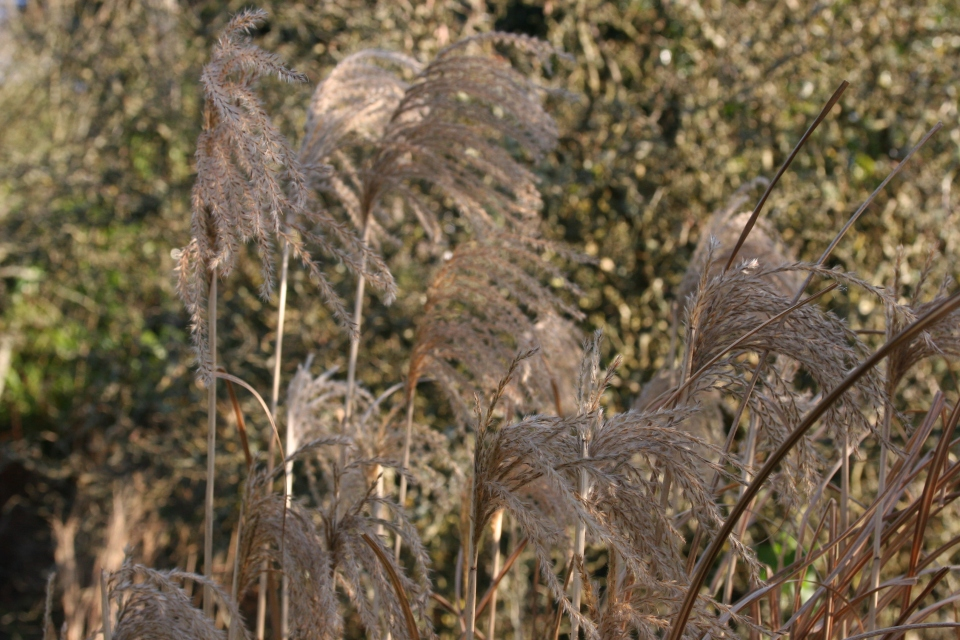Fluffy winter plumes