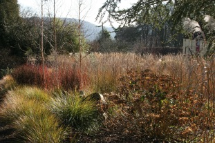 The winter garden bordered by evergreen grasses
