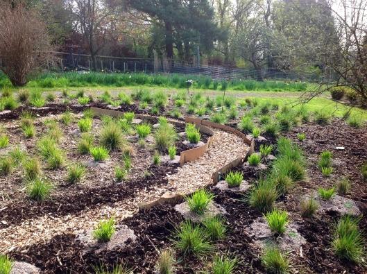 Layered mulch planting of deschampsia and molinia