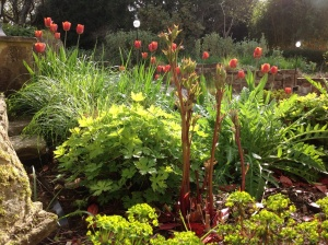 Calamagrostis with orange tulips
