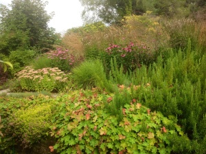 Calamagrostis background