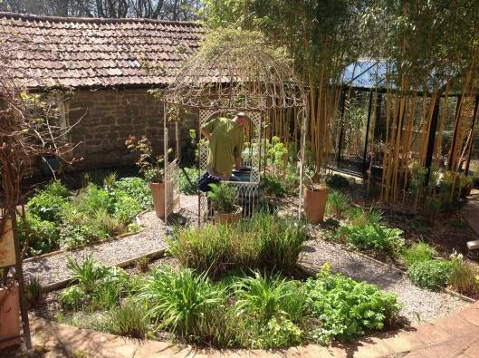 Dividing a hosta in spring