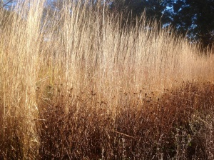 Dried grass and seed heads