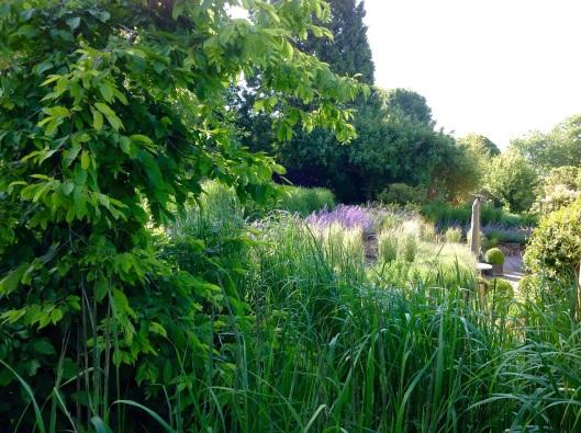 Grasses terrace lit by sunshine