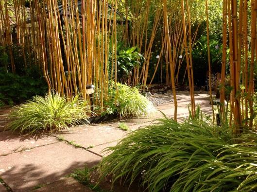 Bamboo hakonechloa June