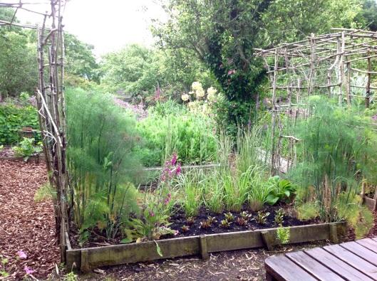 Veg  garden pergola june