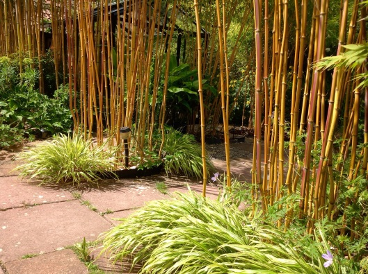 Bamboo and hakonechkoa
