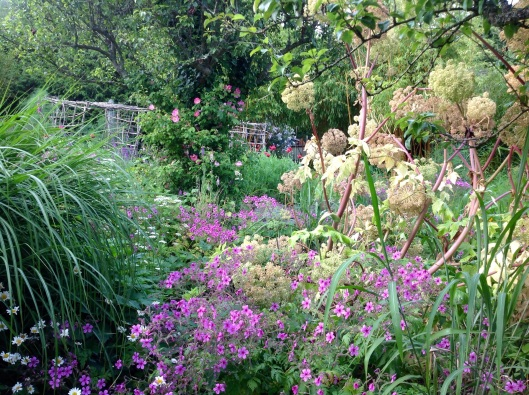 Angelica geranium pergola July