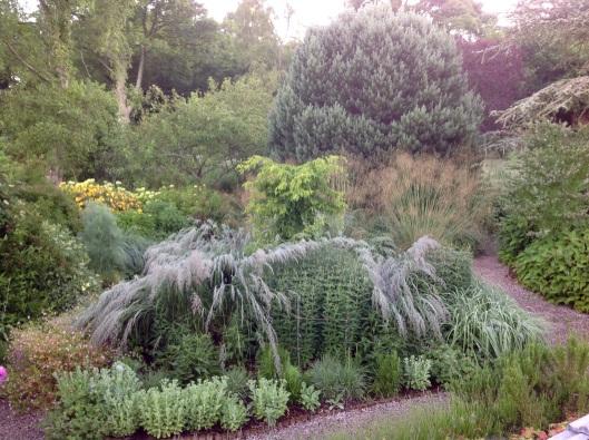 Round bed mist Calamagrostis