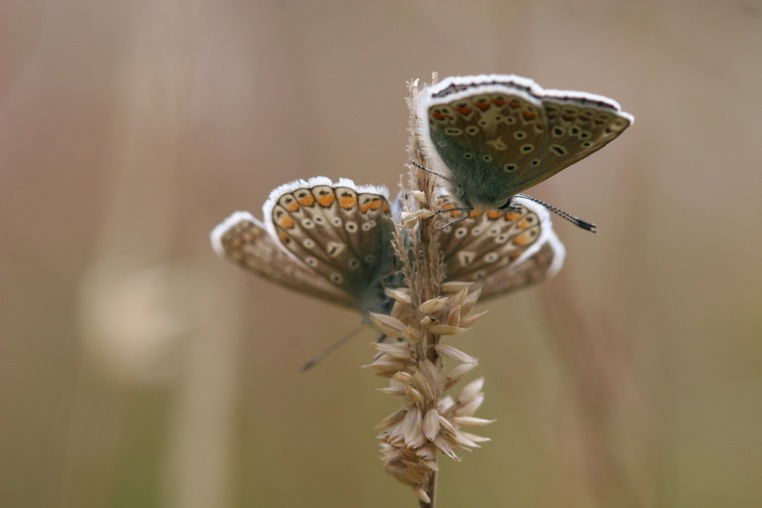 Under wings are camouflaged with orange studs