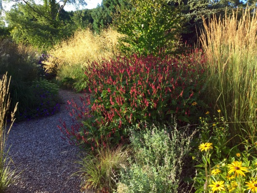 Grasses terrace round bed Stipa persicaria gravel Calamagrostis August