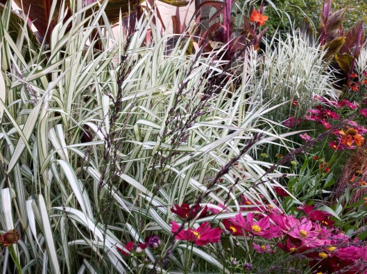 Phalaris White foliage