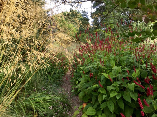 Persicaria planted beside gravel path