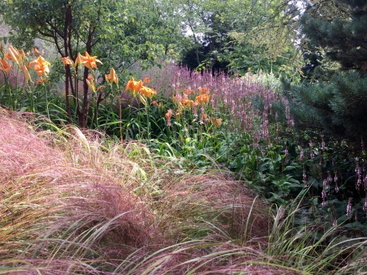 Persicaria with orange day lilies