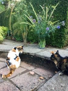 Pennisetum macrourm and cat