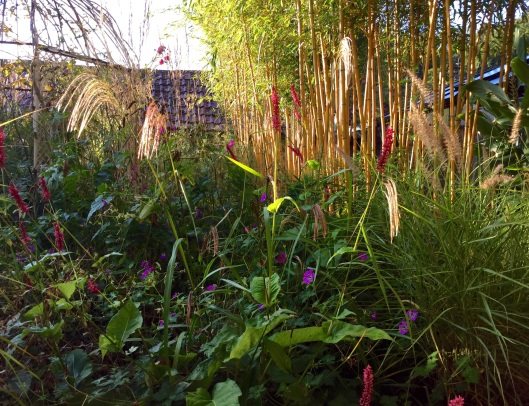 Miscanthus nepalensis in mixed planting