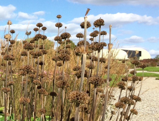 Phlomis against Radic Pavillion