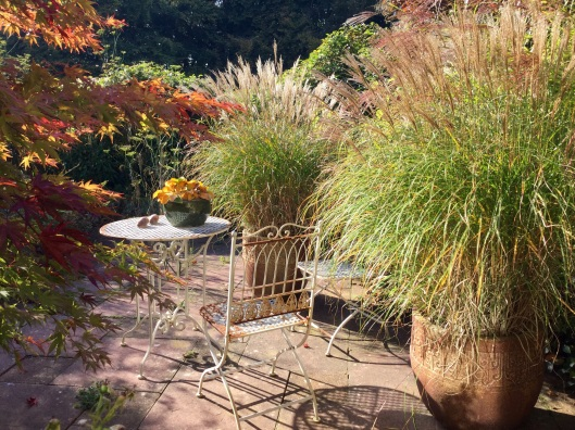 Miscanthus 'Adagio' in patio pots