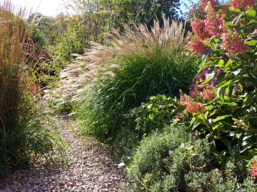 Miscanthus 'Little Kitten'