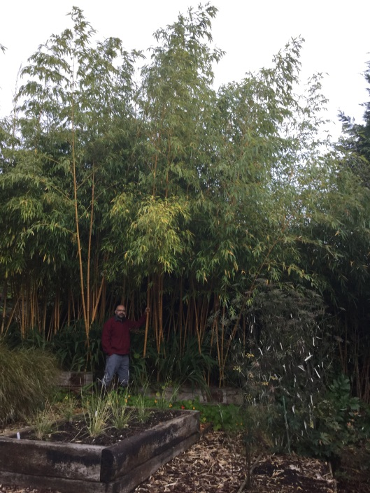 Phyllostachys vivax and Hitesh beside it