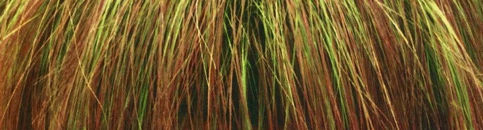 Eragrostis curvula Totnes Burgundy