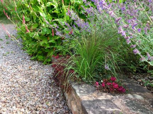 Eragrostis Totnes Burgundy