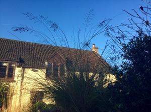 Eragrostis curvula flowers against sky